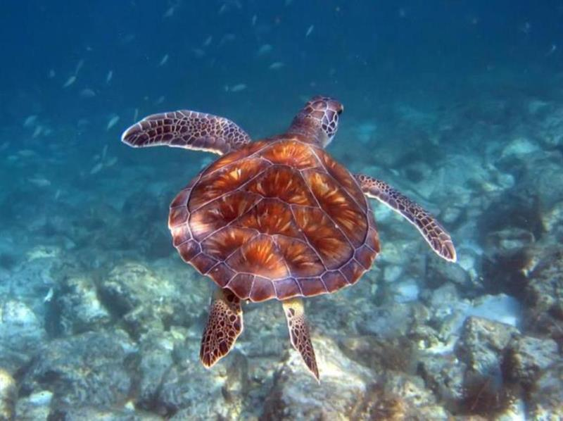 Snorkeling Excursion for One Adult Free